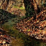 Plis dei fontanili e dei boschi